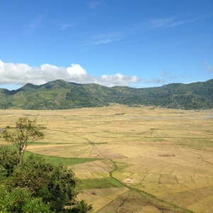 Mysterious crop circles which are actually just really cool rice fields.